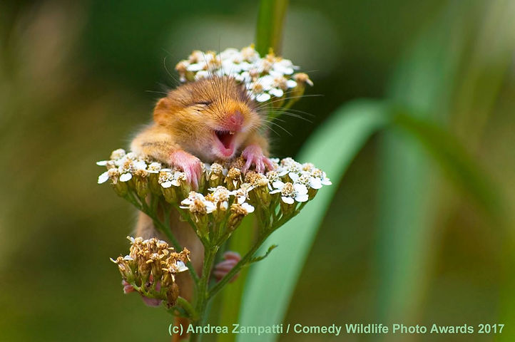 Comedy Wildlife-1.JPG