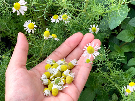 【開講中】植物の香りと精油の化学入門レッスン