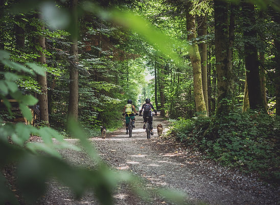 Two women riding bikes in the forest with their dogs following