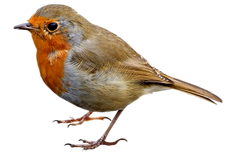 birds_PNG102.png