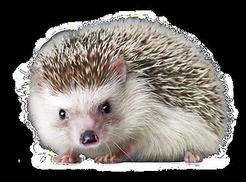 hedgehog_PNG18.png