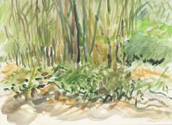 """UCLA Botanical Garden 1"" Watercolor on Board 2014"