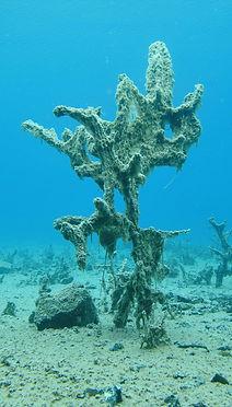 Лазурный под водой