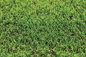nullabor-couch-grass-australia.jpg