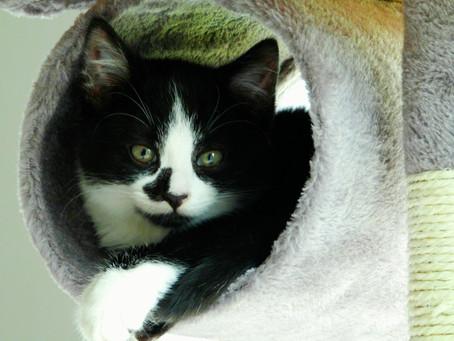 Are Cats Purrs Healing Us? - Biomechanical Stimulation