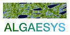 Algaesy-Logo.jpeg