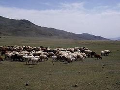 Mongolei_2.jpg