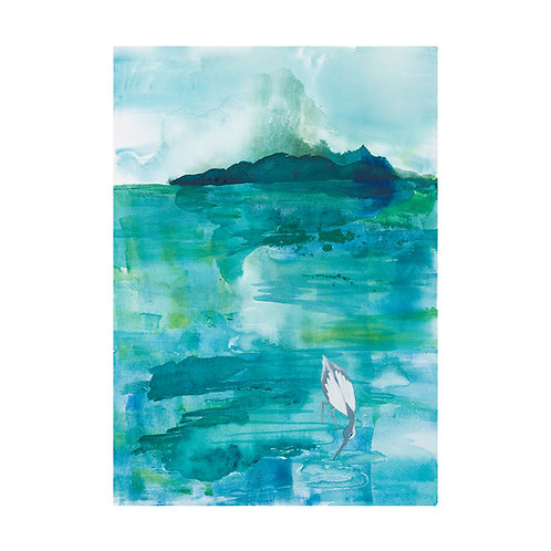 Pied Shag - limited edition giclee prints on watercolour paper