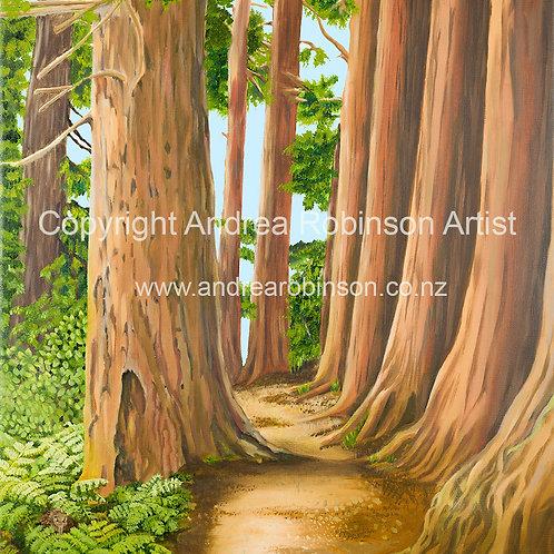 Rotorua Redwoods - original oil on canvas