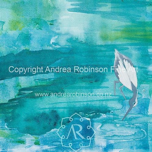Pied Shag  - SOLD - giclee prints available