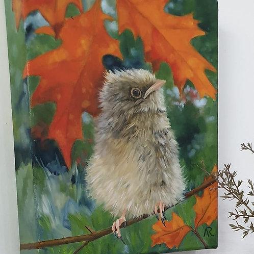 Robin fledgling - original oil on canvas