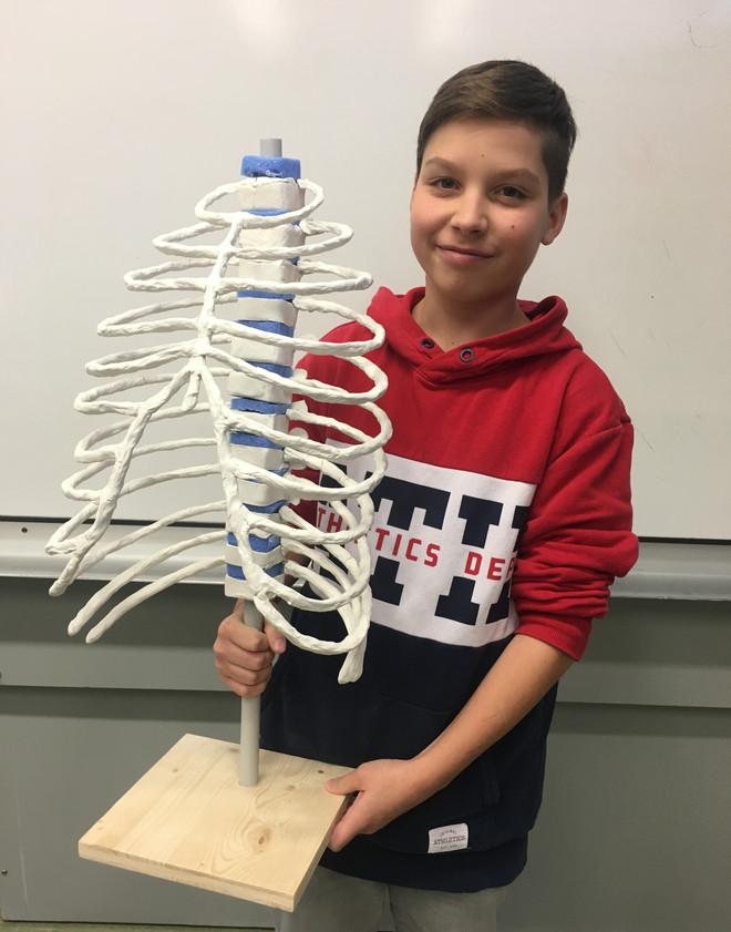 Modell des Brustkorbs