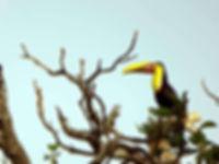 Bird Watching at Manuel Antonio National Park, Tours Manuel Antonio, Tours Quepos, Tours, Tours Costa Rica, ADventure Costa Rica, Ziplining, Park Guide, Manuel Antonio National Park, Manuel Antonio, Hotel