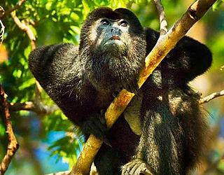 manuel antonio national park Wildlife, Tours Manuel Antonio, Tours Quepos, Tours, Tours Costa Rica, ADventure Costa Rica, Ziplining, Park Guide, Manuel Antonio National Park, Manuel Antonio, Hotel