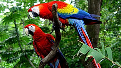 Carara National Park Tour, Costa Rica, Bird Lovers Tour, Carara National Park Tour, Carara National Park Tour in Manuel Antonio, Las Cascadas The Falls, Costa Rica National Parks, Carara National Park, Carara Tour, Las Cascadas The Falls Hotel, Condotel Las Cascadas