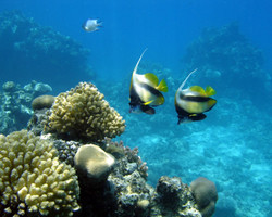 snorkeling tour photo 4