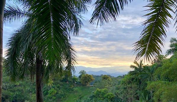 Morgen-Baumkronen-Kombi, Hotel Las Cascadas The Falls, Condotel Las Cascadas, Nationalpark Manuel Antonio, Manuel Antonio, Quepos, Costa Rica