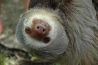 manuel antonio park tour with a sloth, Tours Manuel Antonio, Tours Quepos, Tours, Tours Costa Rica, ADventure Costa Rica, Ziplining, Park Guide, Manuel Antonio National Park, Manuel Antonio, Hotel