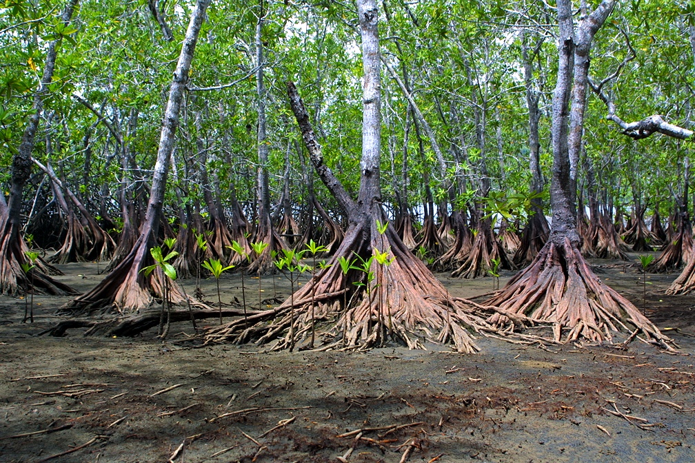 mangrove tours in manuel antonio, mangrove tours in quepos, mangrove tours in costa rica, damas isla