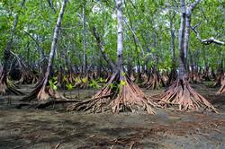 mangrove tours in manuel antonio, mangrove tours in quepos, mangrove tours in costa rica, damas isla