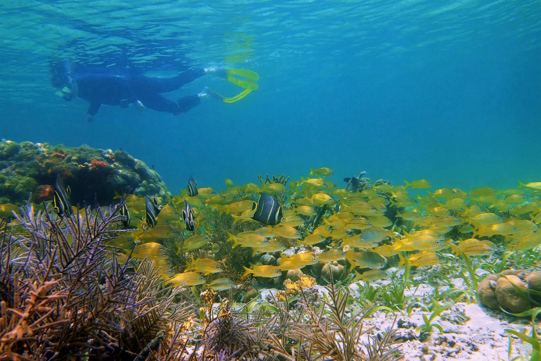 Manuel Antonio National Park, Quepos Manuel Antonio, LAs Cascadas The Falls, Best Hotels in Manuel A