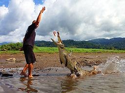 Crocodile Mangrove Tour, Crocodile Mangrove Tour Manuel Antonio, Crocodile Tour Tarcoles, Tarcoles River, CrocodiTour in Jaco, Tarcoles River Tour, Tarcoles Crocodiles, Tarcoles River, Tarcoles Tour in Manuel Antonio, Tacrcoles River Costa Rica, Crocodile Tour, Crocodile Tour
