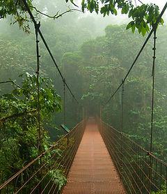 Monteverde National Park Tour, Monteverde cloud Forest Tour, Monteverde Coffee Plantation Tour, Monteverde Cloud Forest Natinal Park, Monteverde Tour }, Manuel Antonio National Park, Monteverde, Las cascadas The Falls, Condotel Las Cascadas, Monteverde Day Tour, Monteverde Tour