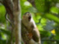 manuel antonio tour in costa rica,Tours Manuel Antonio, Tours Quepos, Tours, Tours Costa Rica, ADventure Costa Rica, Ziplining, Park Guide, Manuel Antonio National Park, Manuel Antonio, Hotel