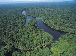 damas-island-mangrove-boat-tour-la-mariposa-hotel-manuel-antonio-costa-rica-1
