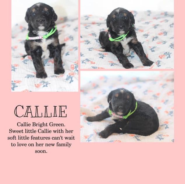 Callie.jpg