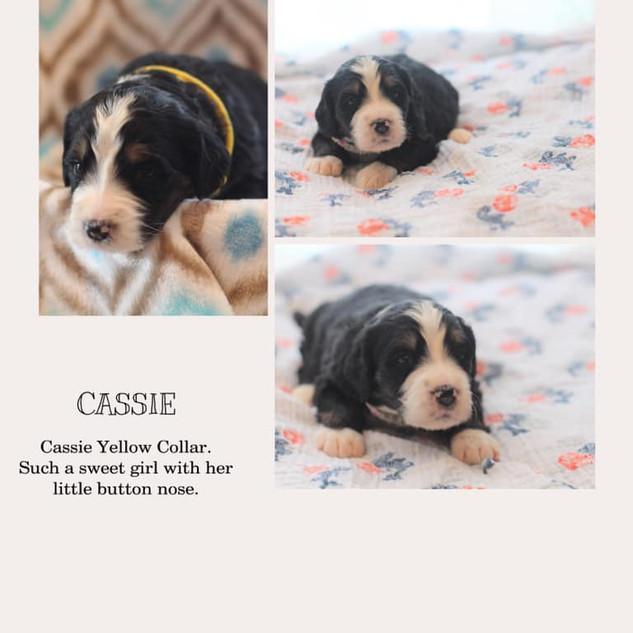 Cassie.jpg