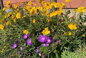 SLC.polinator garden.jpg