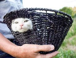 Newt in a basket #2.jpg