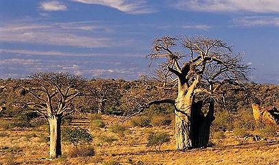 Mapungubwe National Park3.jpg