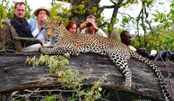 timbavati-safari-fp