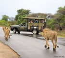 Kruger-Park-Safaris-1-332x295.jpg