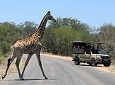 Game drive safari 1.jpg