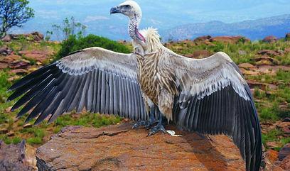 Marakele National Park3.jpg