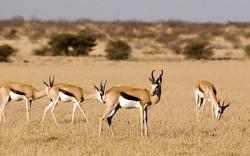 Central-Kalahari-Game-Reserve_01-1200x75