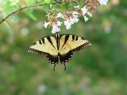butterfly taken by Melinda