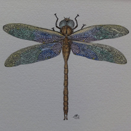 Stained-glass Dragonfly
