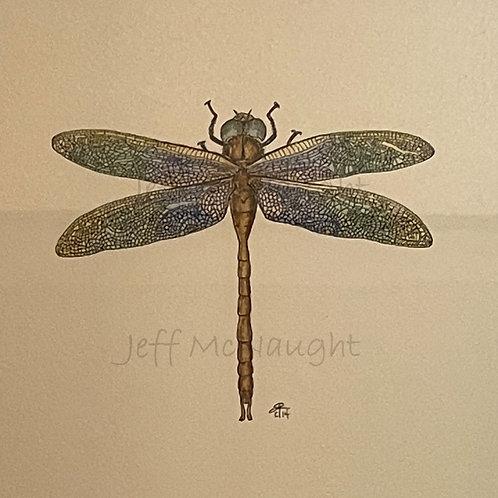 Dragonfly - Framed Print