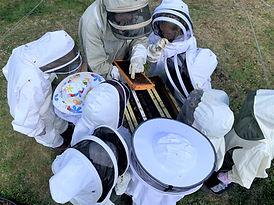 bee-education-smith-lake-farm.jpg