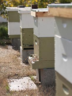 smith-lake-farm-honey-bees.jpg