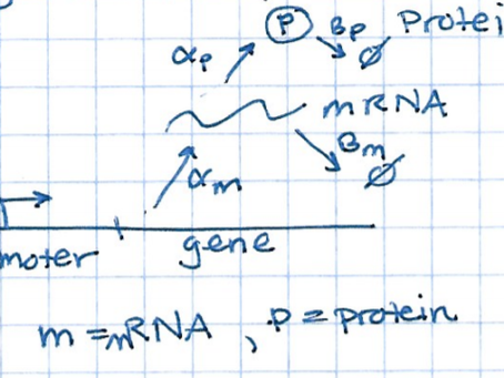 Lesson 1: Modeling gene expression with differential equations