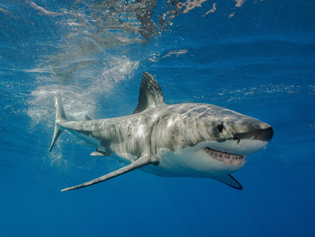How much does it cost to swim with the sharks?