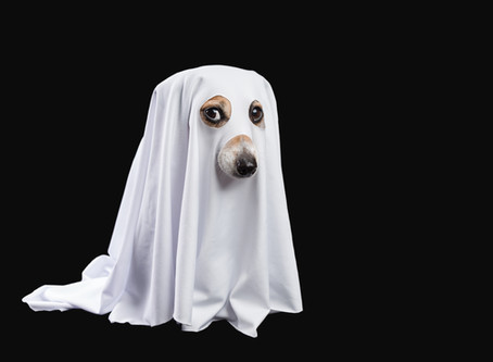 Why are ghosts such bad liars?