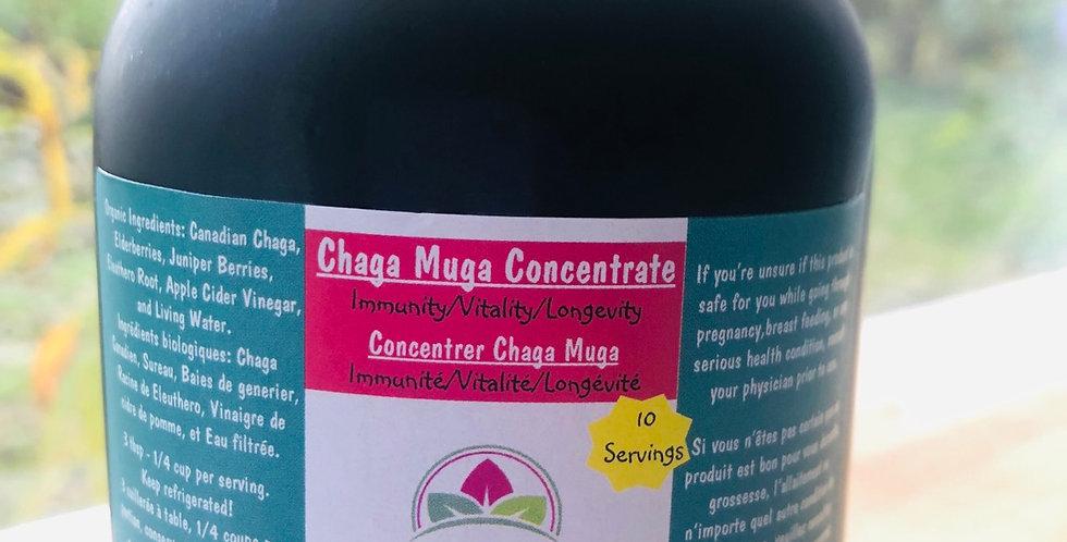 Chaga Muga Concentrate