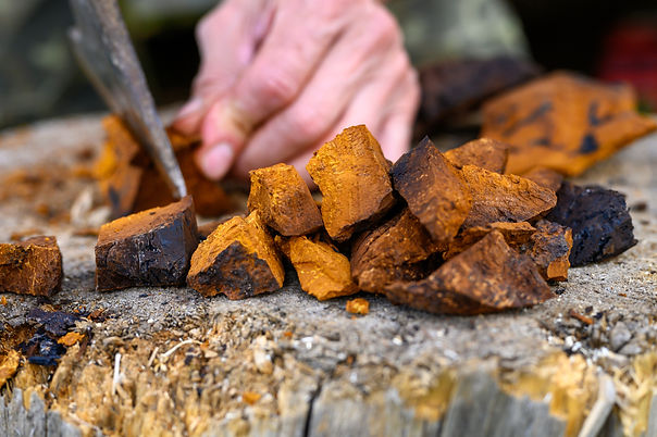 pile pieces of sliced and peeled chaga mushroom birch fungus are stacked against the backg