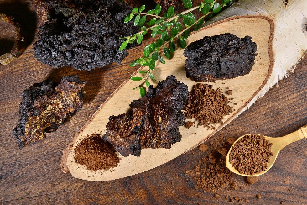 Chaga Mushroom on a wooden Table. Healthy Nutrition with Chaga Powder on a Spoon. Inonotus
